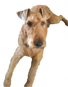 Georgedog