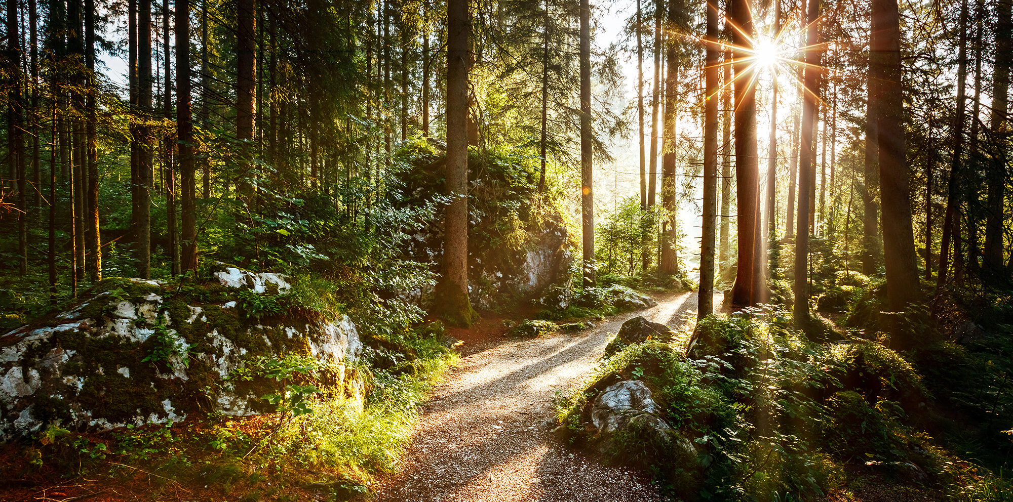 Trail in forest during sunrise