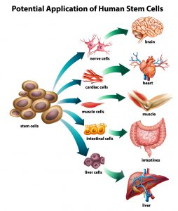 stem-cell-uses-16
